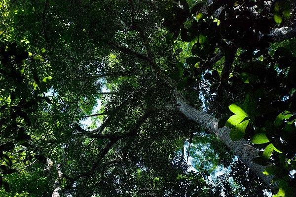 Pinceladas de Luz Verde Amazônico - Quadros/Decorações