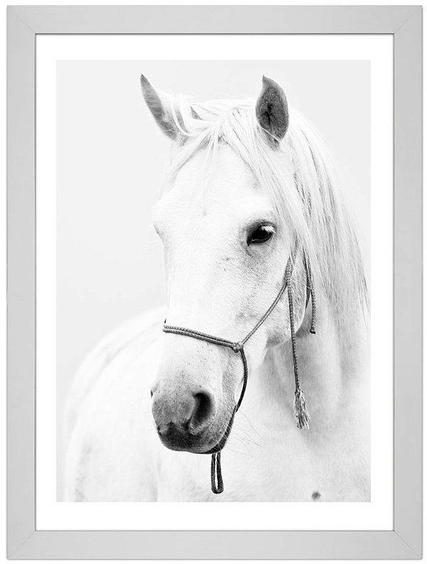 Quadro de Fotografia - Cavalo Branco