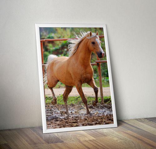 Horse - Emoldurado