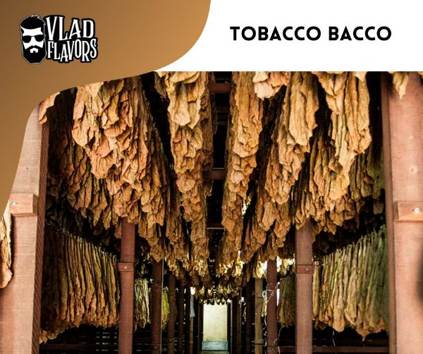Tobacco Bacco 10ml   VF