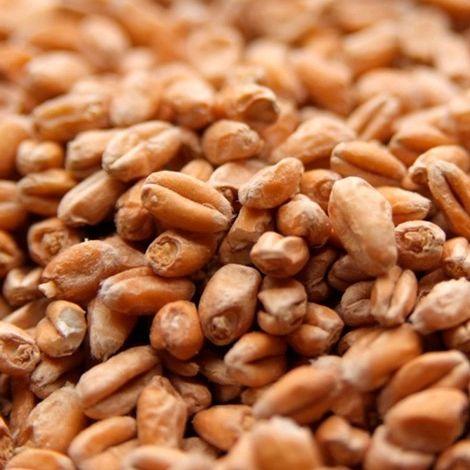 Malte Viking Wheat (trigo) - 1 Kg
