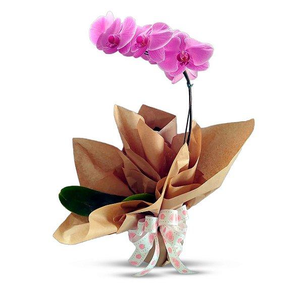 Orquídea Branca ou Lilás