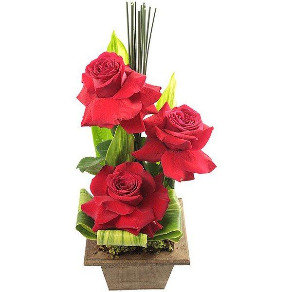 Trio de rosas colombianas