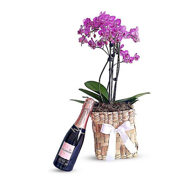 Sensatez - Mini Orquídea + Chandon Baby