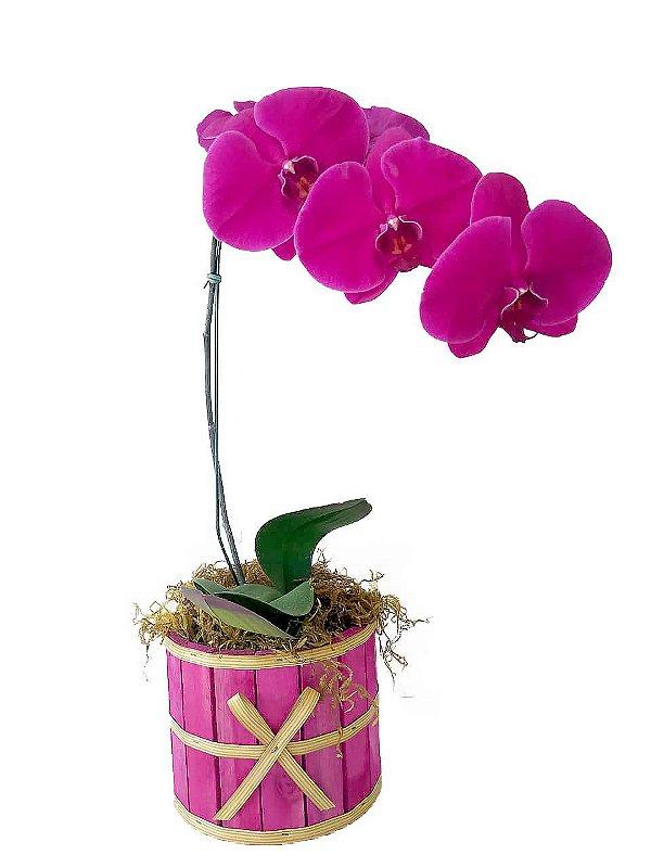 Orquídea Phaleo Pink