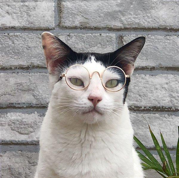 óculos cat - Transparente