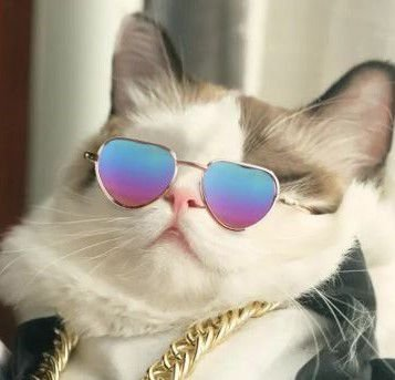 ÓCULOS cat - AVIADOR