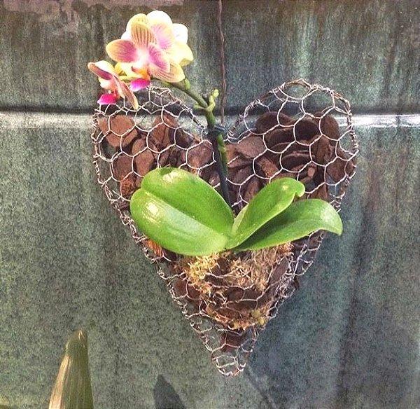 Coração para orquídea