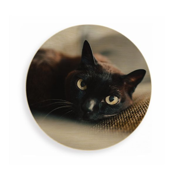 Quadro de Madeira Redondo - Gato preto