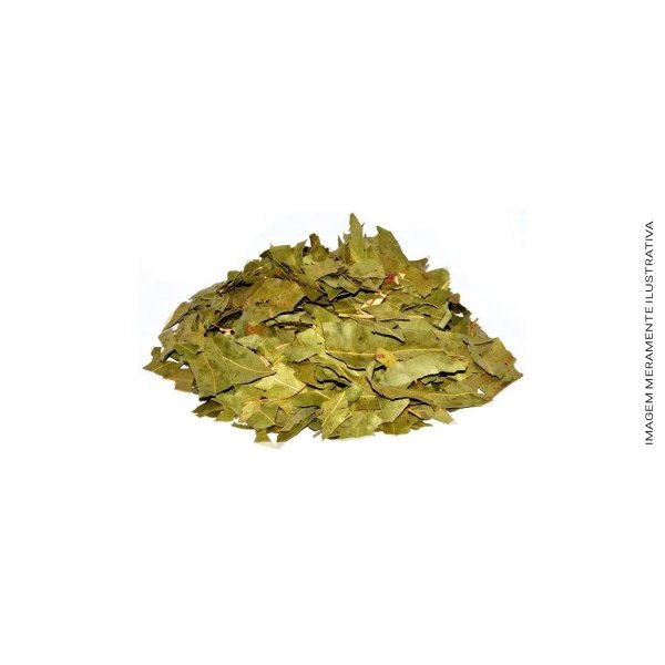 Eucalipto Citrodorus Com Cheiro