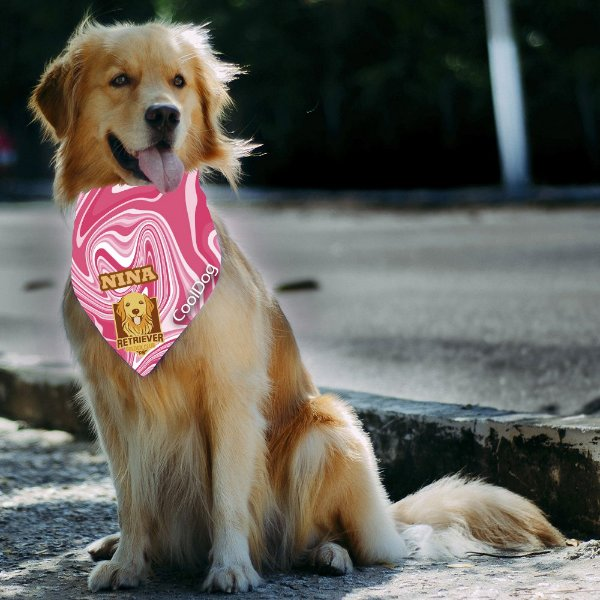 BANDANA EXCLUSIVA RETRIEVER GOLDEN CLUB