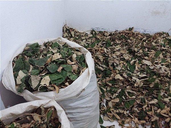 CHÁ DE CANELA DE VELHO (MICONIA ALBICANS) -100 gramas