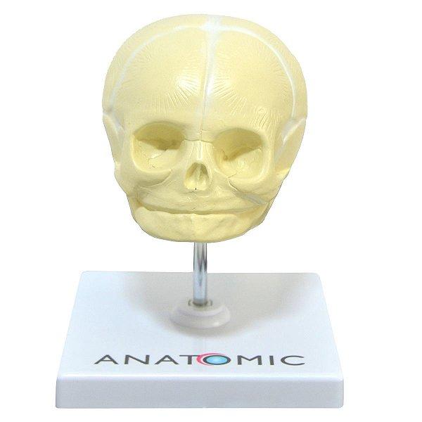 Crânio Fetal - TGD-0102-C