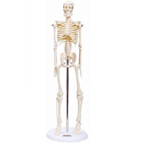 Esqueleto 45 cm - TGD-0121