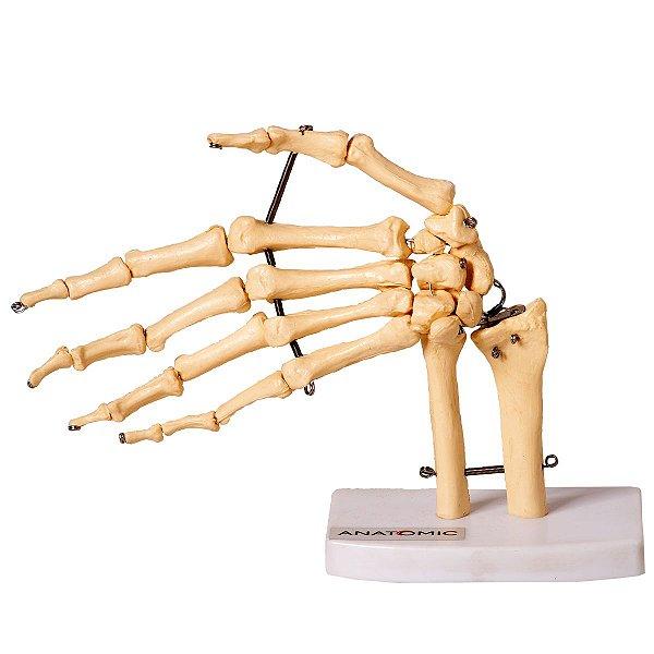 Esqueleto da Mão com Ossos do Punho - TGD-0157-B