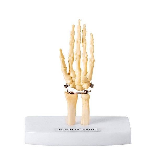 Mini Esqueleto da Mão - TGD-0162-B
