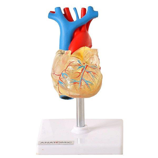 Coração Transparente 2 Partes Sistema Condutor - TGD-0322-T