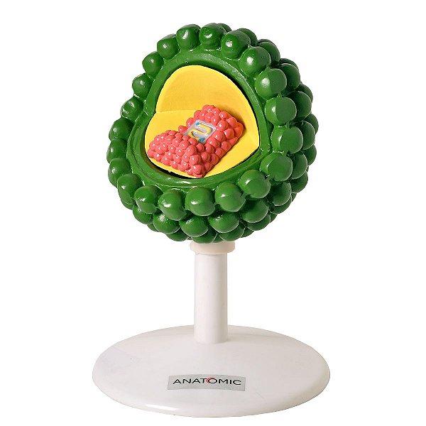 Vírus HIV - TGD-0335-A