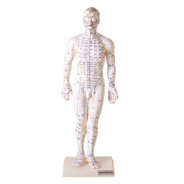 Modelo Acupuntura Masculino 50 cm - TGD-0404