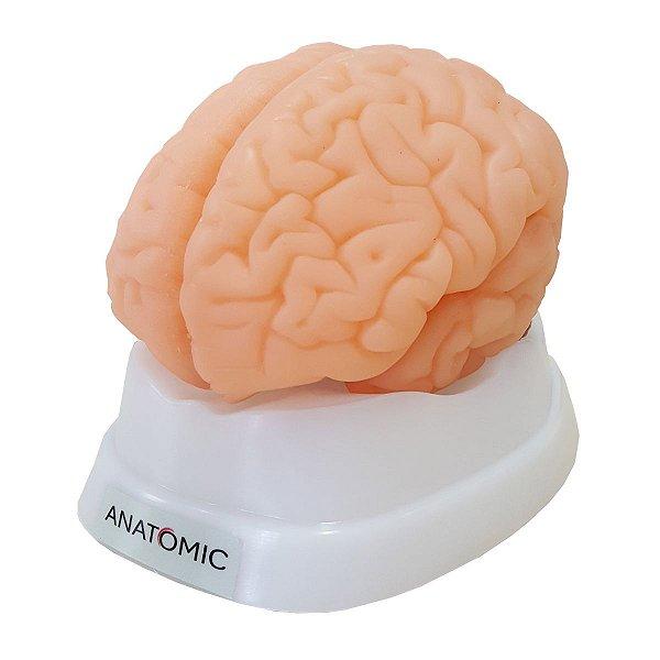 Cérebro em 9 Partes - TZJ-0303-S