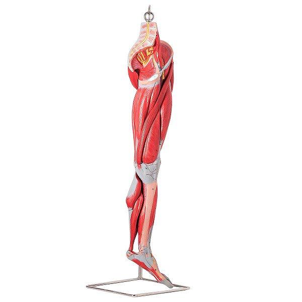 Dor lombar e dor nas pernas durante períodos remédios