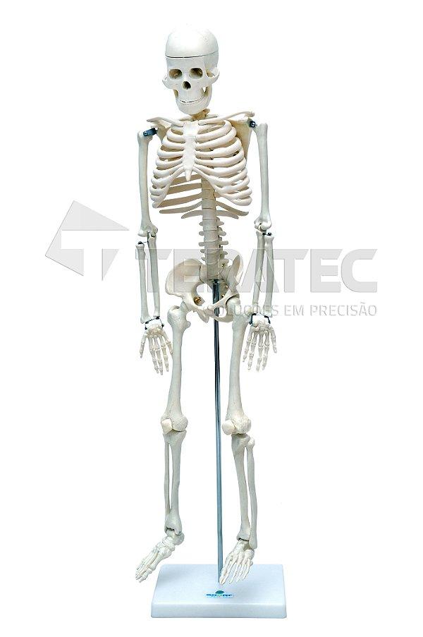 Esqueleto Humano de 85 cm com Suporte - SD-5002