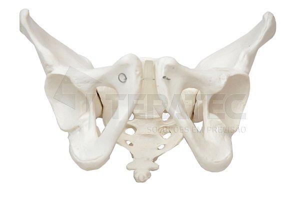 Esqueleto Pélvico Feminino - SD-5005