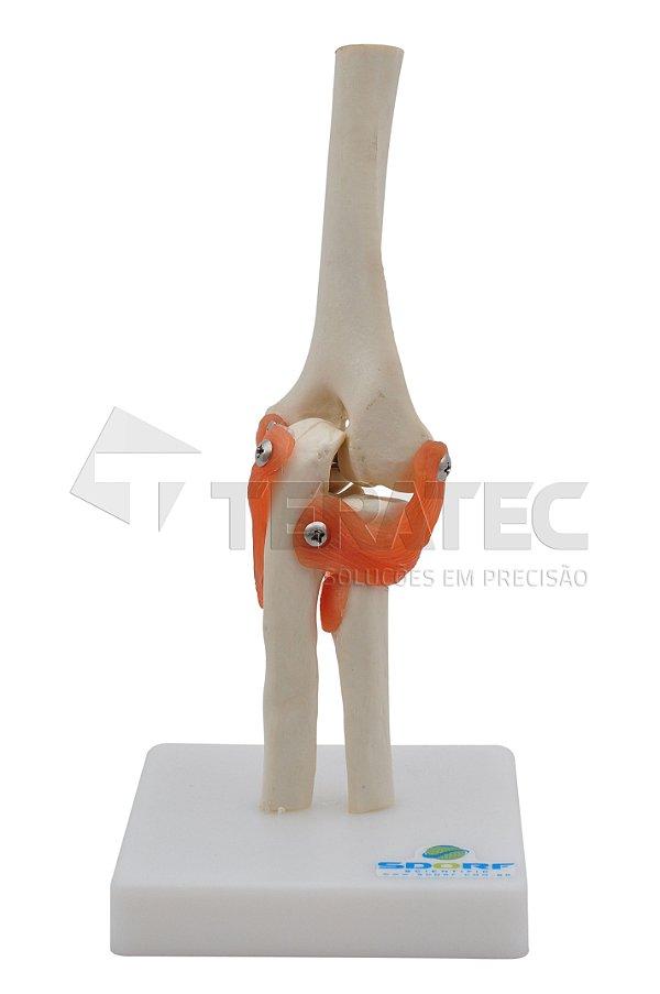 Articulação do Cotovelo - SD-5017