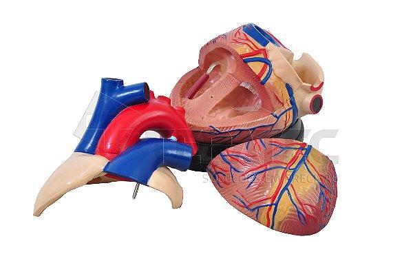 Coração Ampliado em 3 Partes - SD-5048