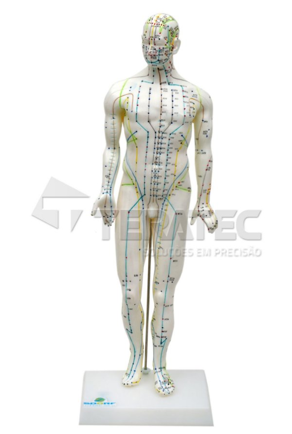 Modelo de Acupuntura Masculino de 50cm - SD-5098
