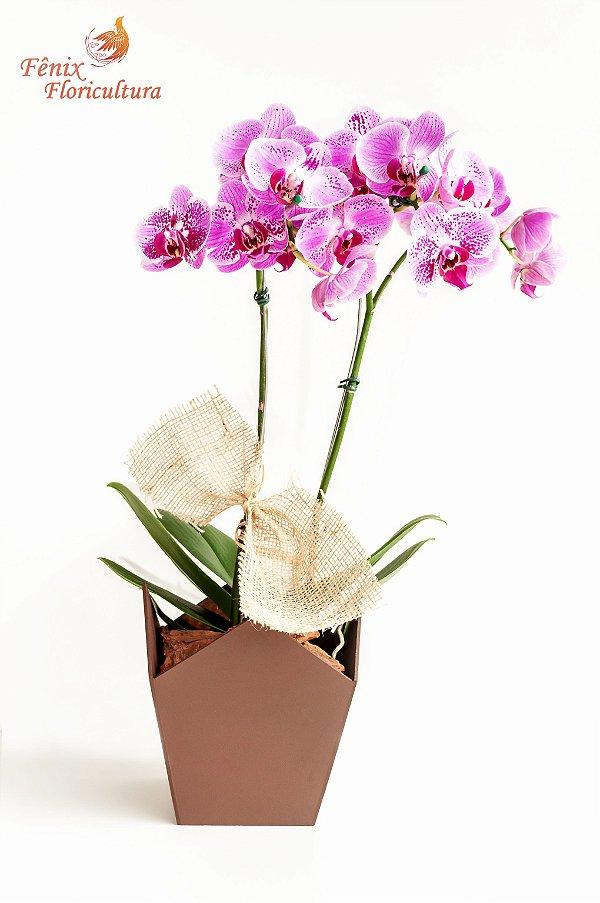 Luxuosa Orquídea Exótica com 02 Hastes