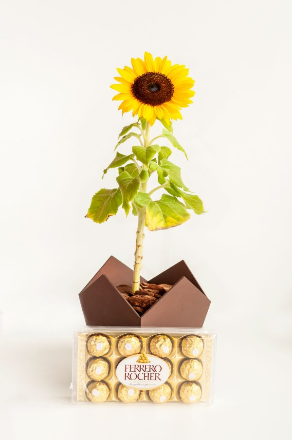 Girassol com Ferrero Rocher