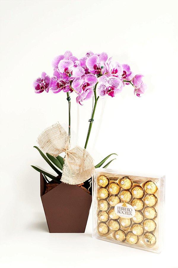 Orquídea Phaleonopsis Exótica com Chocolate