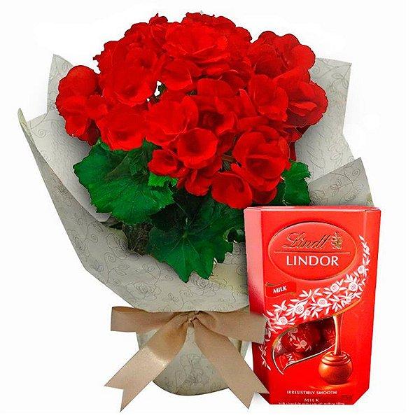 Begônia Vermelha ou Rosa com Lindt