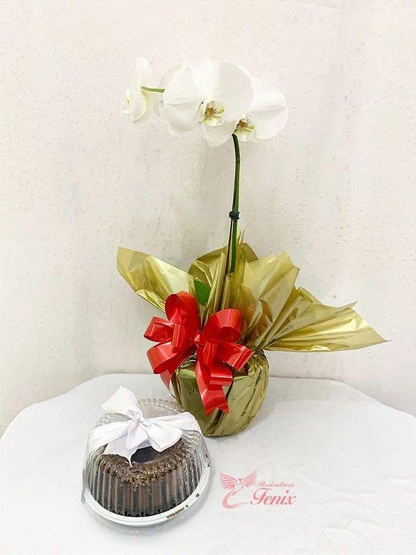 Orquidea Luxo com Bolo de Chocolate