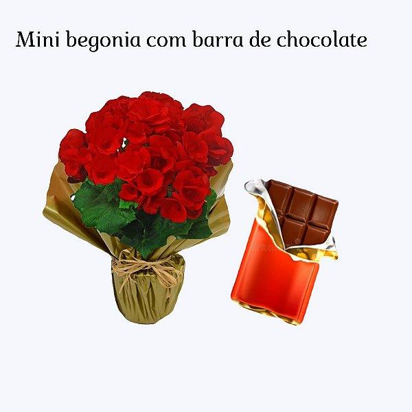 Begônia Mini com Barra de Chocolate