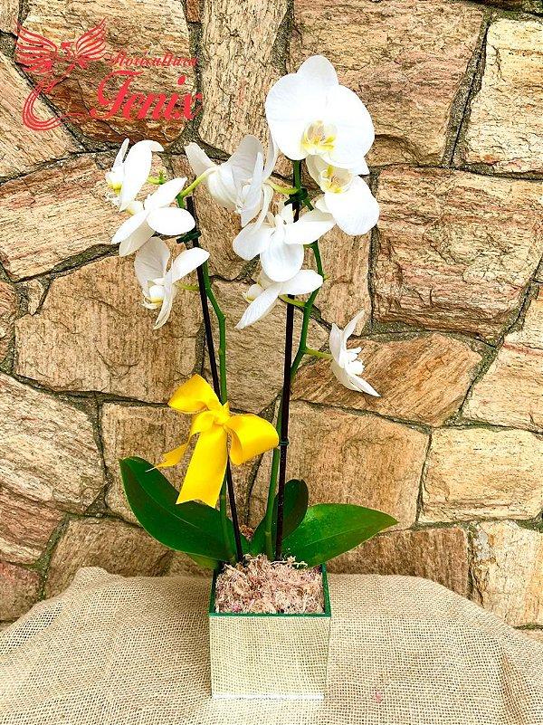 Orquídea Phaleonopolis Branca  No Vaso Espelhado