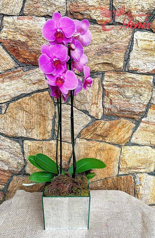 Glamourosa orquídea 2 hastes em Vaso Espelhado