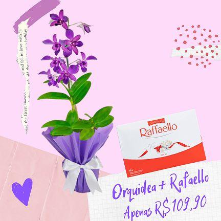 Orquidea Denphal com Rafaello