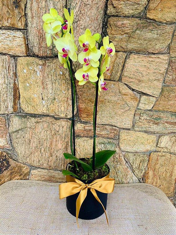 Rara orquídea amarela na caixa Box