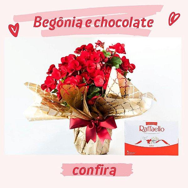 Begônia com Chocolate Rafaello