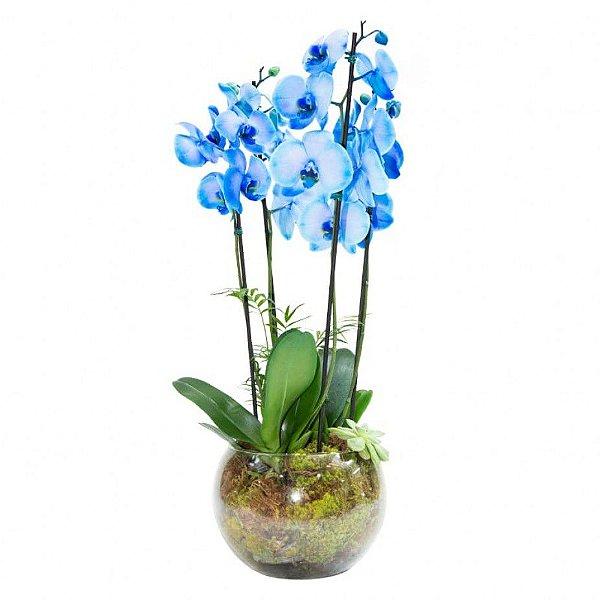 Orquídea Azul em Vaso Grande de Vidro com 4 hastes