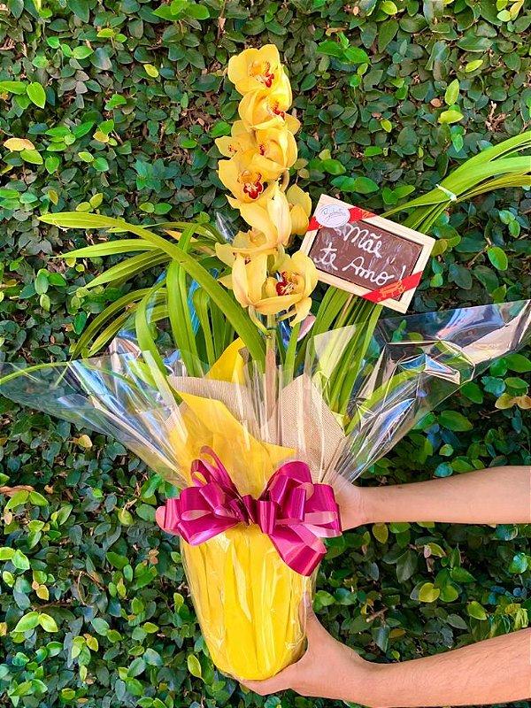 Luxuosa Orquídea Cymbidium com Chocolate ''Mãe eu Te amo''