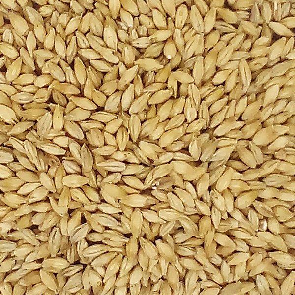 Malte Pale Ale - 5,5 a 7,5 EBC - Agrária