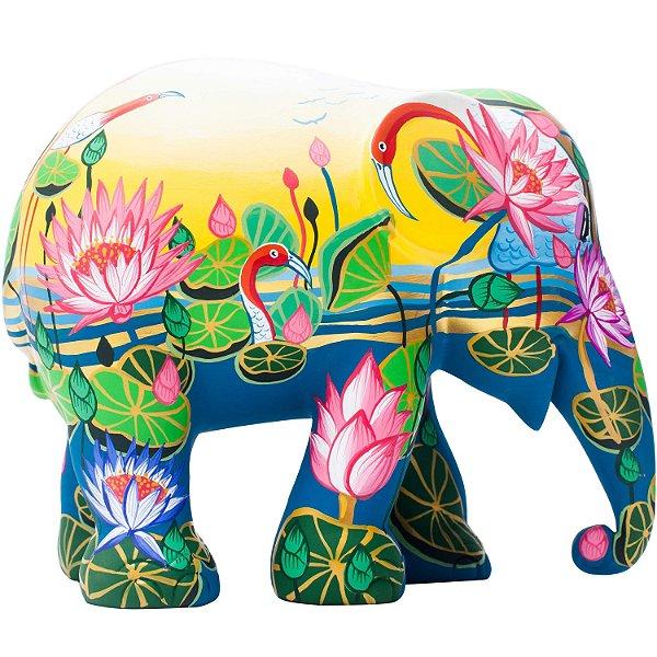 Amazing Lotus - 10 cm