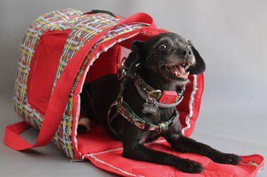 Bolsa Transporte Cães Nylon Impermeável D2K