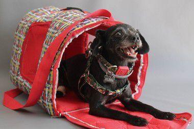 Bolsa Transporte Estampada Impermeável Cães D2K