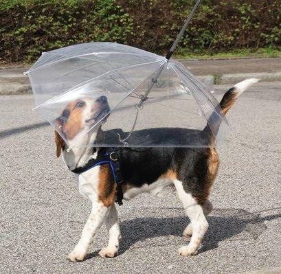 Guarda Chuva para Cão