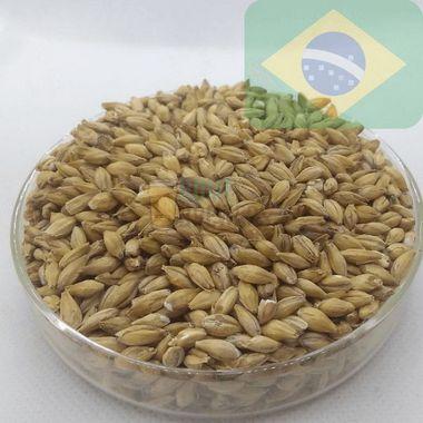 Pale Ale Agraria (6,5 EBC)