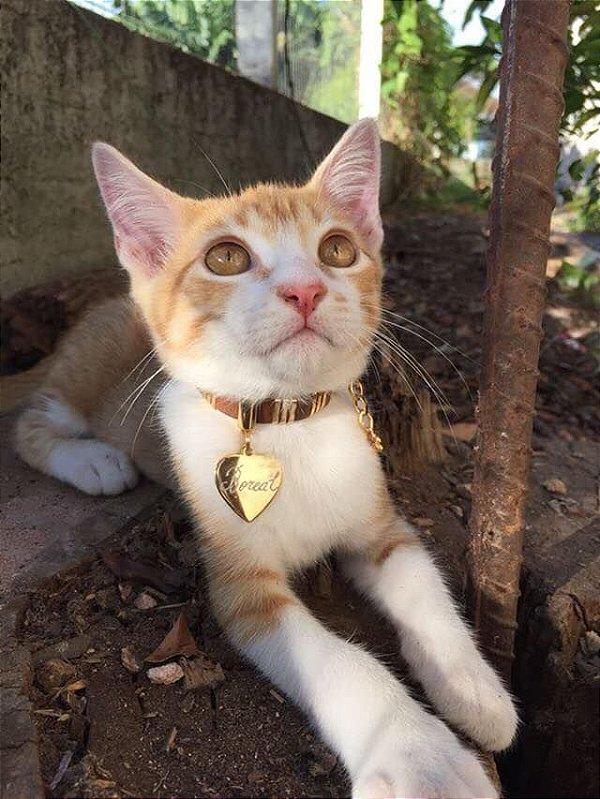 Colar Pet FASHION para Cães e Gatos